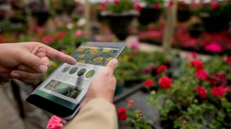 How to identify plant species using my Android mobile?